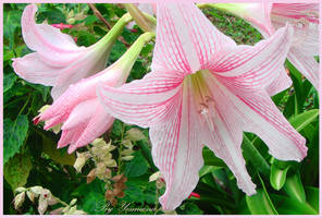 pink and white  flowers by yesmeena