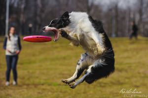 Flying dog by JaneKoshchina