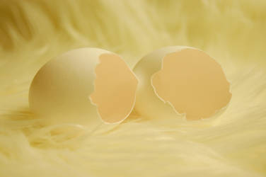 eggs by GestiefelteMieze