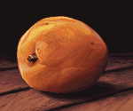 Apricot - Pixel Art by API-Beast