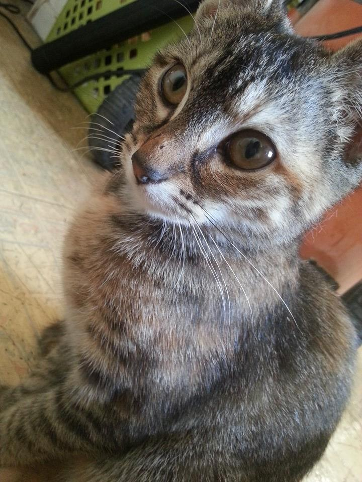 Kitty Cat by ChuuiHawkeye