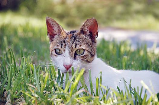 Little cat... 2