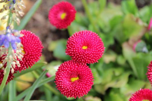 Salish Flowers