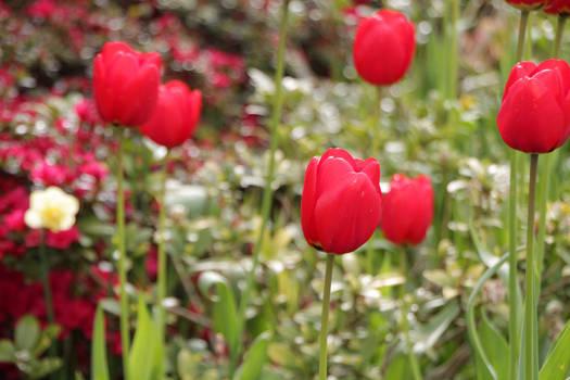 More Salish Flowers