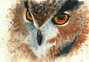 Owl by Medhi