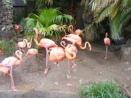 Flamingos I by sweet-choia