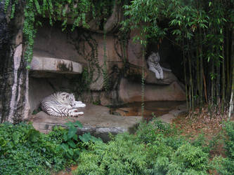White Tiger II by sweet-choia