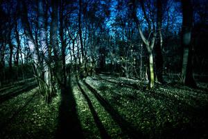 Dark Forest by GoRk88