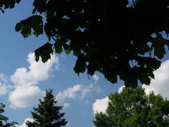 Tree's and Sky