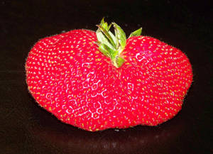 Huge Strawberry 2