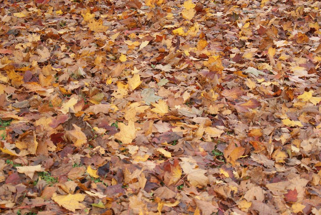 wonders of leaves. by PhenomenalPhoto