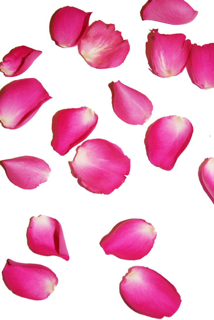 rose petals by phenomenalphoto on deviantart free clipart downloads for windows 10 Microsoft Gallery Clip Art Free
