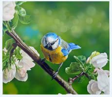 Bluetit and Apple Blossoms by neanderdigital