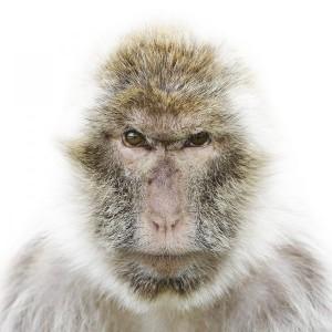 romashkoalex's Profile Picture