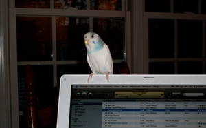 My Bird by chil96