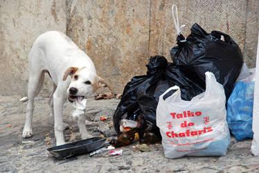 Perro callejero en Lisboa