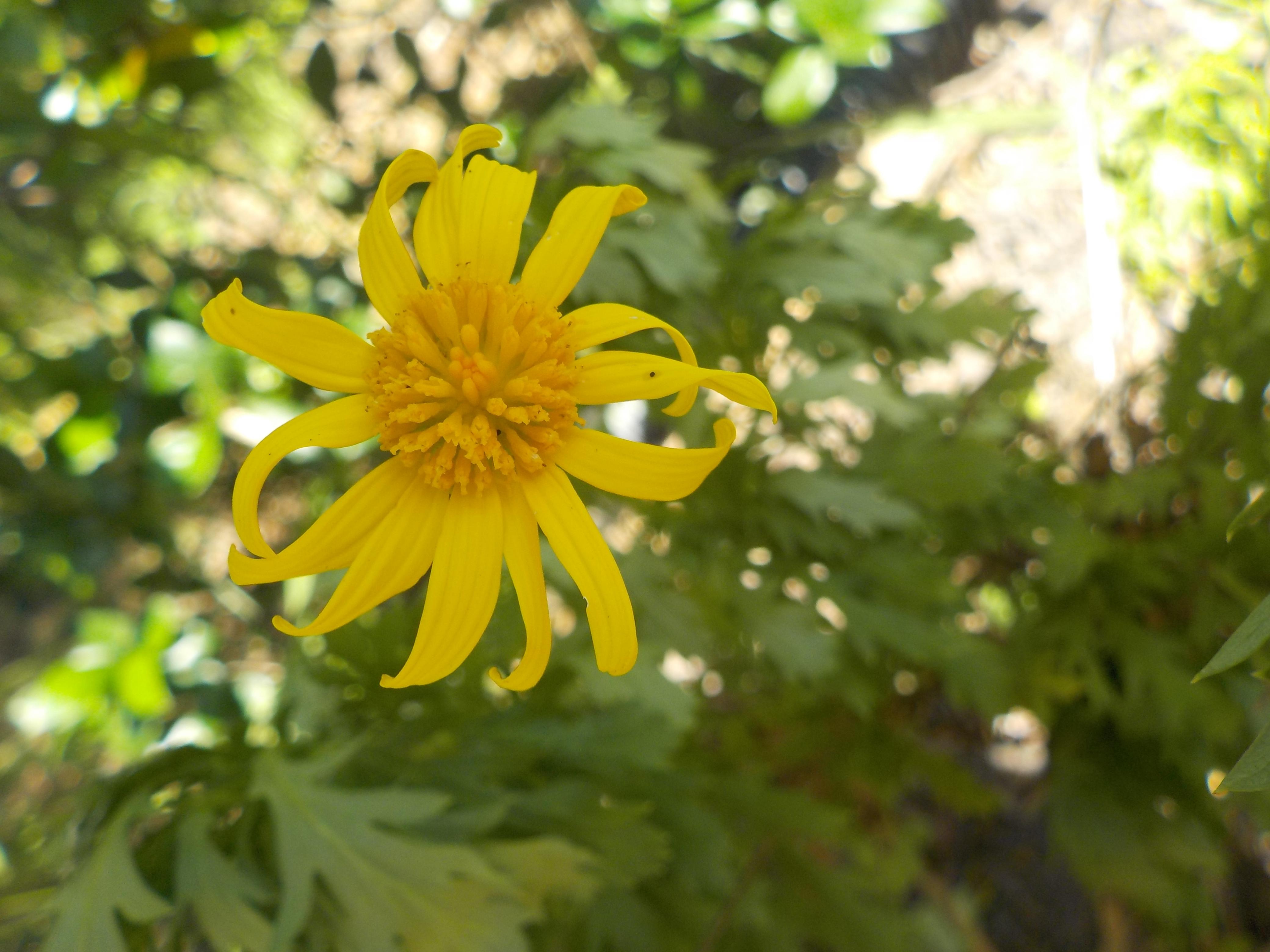 Dainty Flower by Taking-Flyte