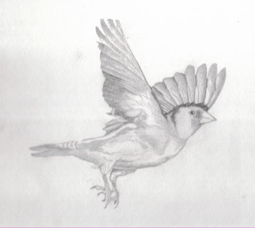 Bird In Flight Sketch By Doodlecrazy On DeviantArt