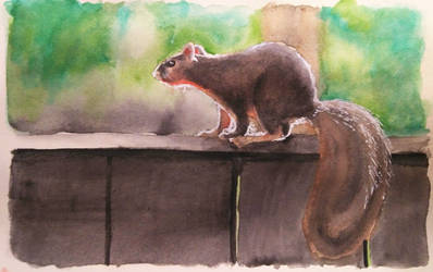 Inktober #26 Fox Squirrel