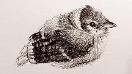 Inktober #30 Blue Jay