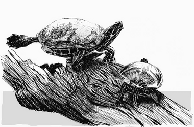 Turtles of the Sun