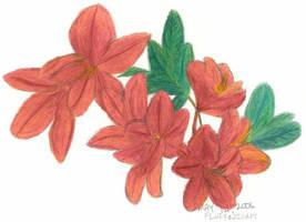 Flowers by fluffnight
