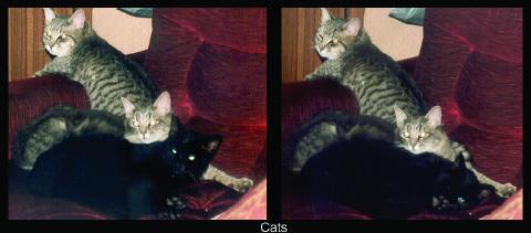 .:Cats:. by Alyzee
