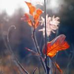November's Color Dreams