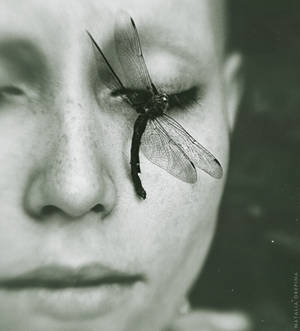 A Dragonfly's Death