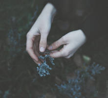 The wormwood's bitterness in my touch