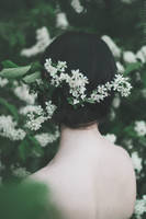 Fairytale of Bird-Cherry Tree by NataliaDrepina