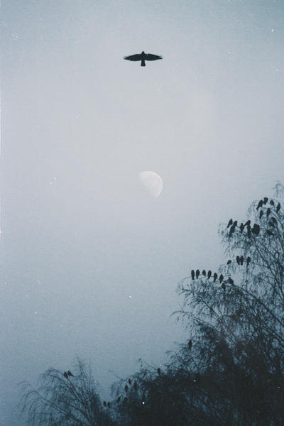The Sleepless Black Bird by NataliaDrepina