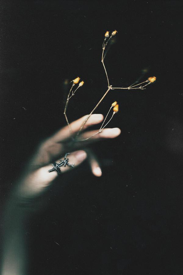 Herbarium of the black night