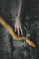 Snake by NataliaDrepina