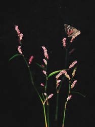 Flower blush and timid moth by NataliaDrepina
