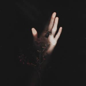 Through the dark garden