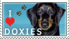 Doxie Stamp 2 by dappledoxie