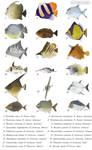 Weird fish 1 - Pycnodontiforms