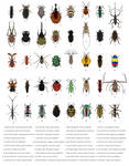 Never-ending variety 1 - Beetles