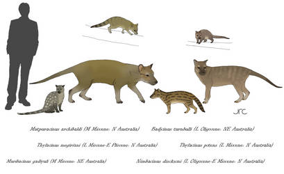 Wolf imposters of Down Under - Thylacinids