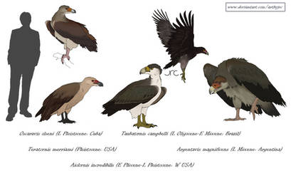 Monster Birds - Teratorns by artbyjrc