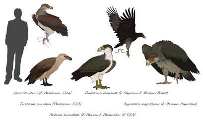 Monster Birds - Teratorns