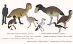 Birds of Mass Destruction - Phorusrhacids
