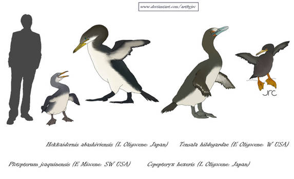 Pseudo-penguins of the Pacific - Plotopterids