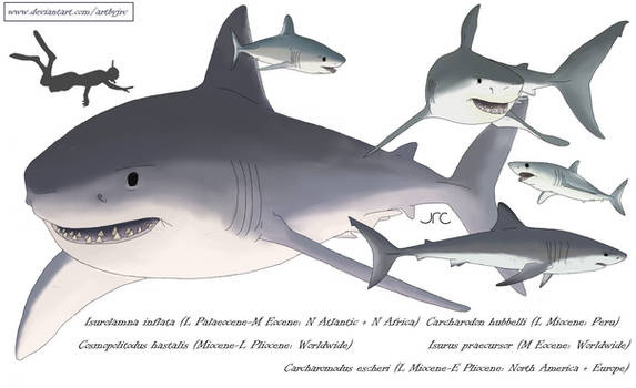 Going to need a bigger boat - Lamnid sharks