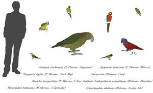 The Ex-parrot Club - Psittaciformes