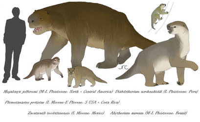 Ground Sloths 2 - Megalonychids