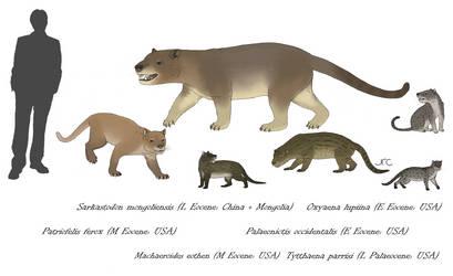 Pseudo-felids (sort of) - Oxyaenids