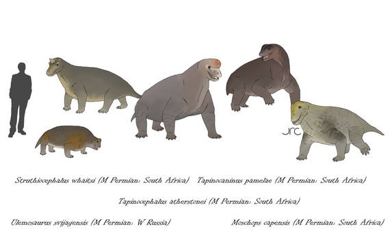 Boneheads - Tapinocephalids