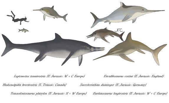 True fish lizards 1 - Basal parvipelvians